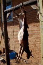 Hung up.