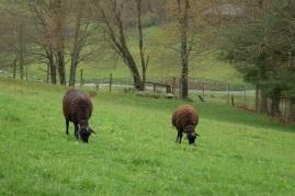 Helena and Sarah before lambs.