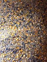 Corn, barley, and sunflower seeds is how we supplement the sheep's diets.
