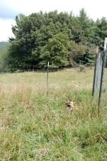 Field Aug 13