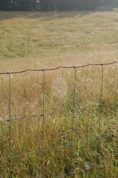 Field Jul 18