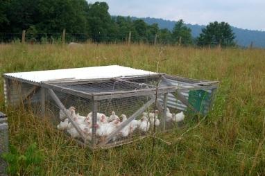 Poultry Jul 1